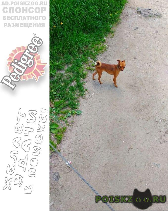 Пропала собака г.Сыктывкар