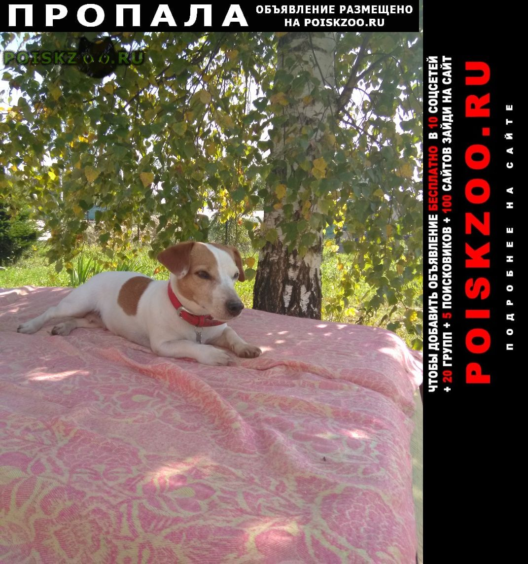 Пропала собака ищем более трёх месяцев, думаем вывезена г.Серпухов