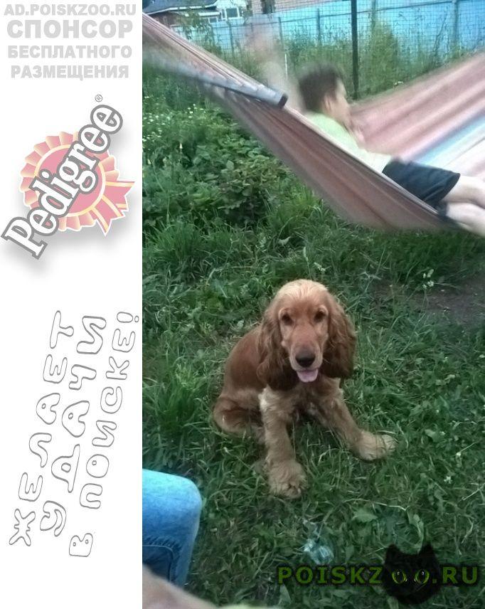 Пропала собака кобель помогите найти пса г.Уфа