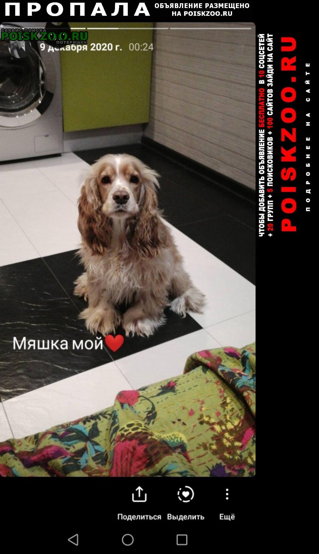 Пропала собака кобель Сургут