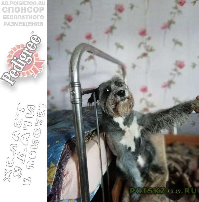 Пропала собака кобель г.Нижний Тагил