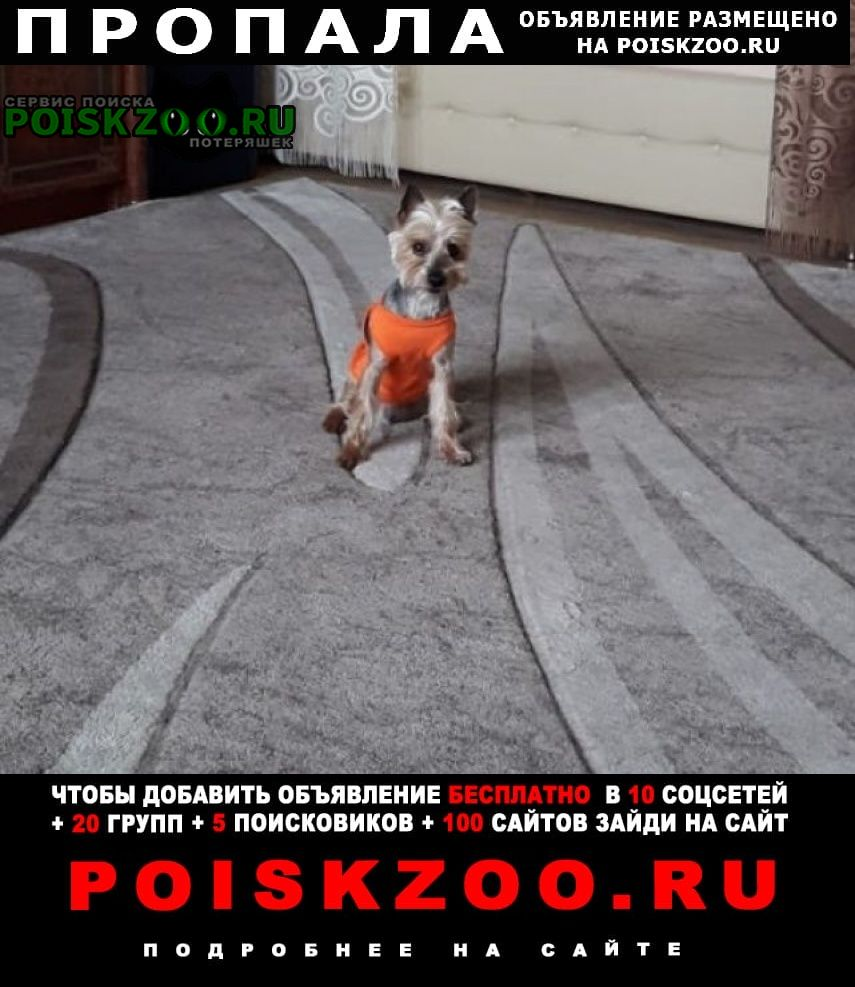 Москва Пропала собака кобель йорк