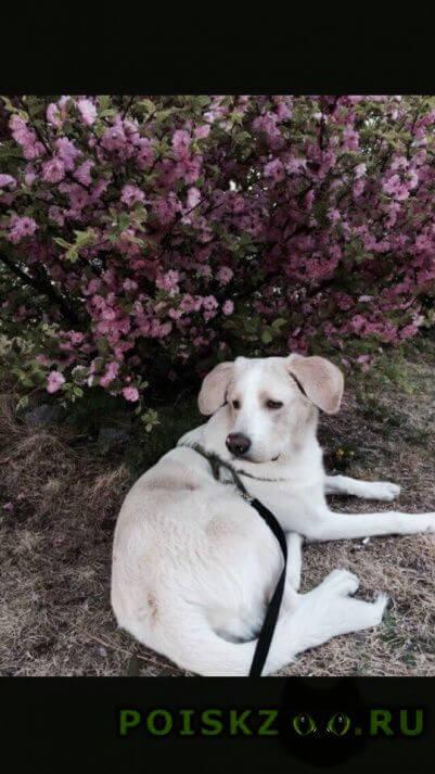 """Пропала собака кобель в районе флегонтова.отзывается """"каха"""" г.Хабаровск"""