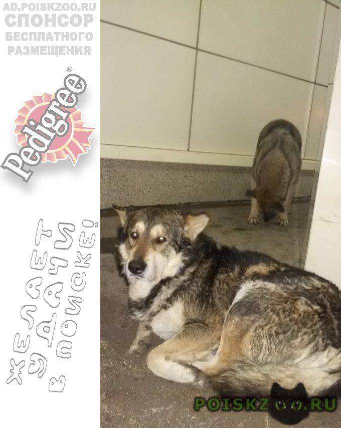 Пропала собака кобель немолодой г.Москва