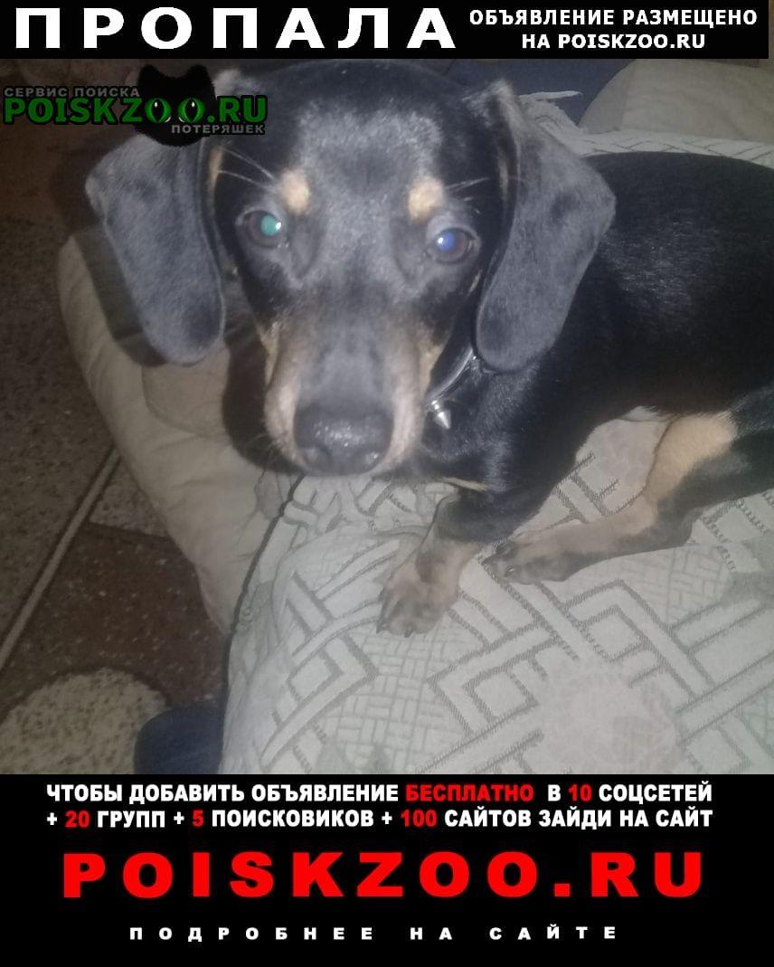Пропала собака кобель Донской