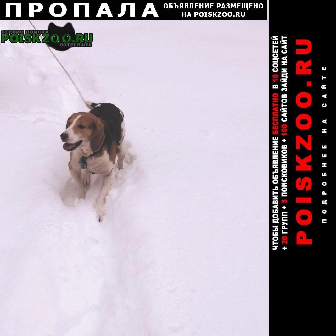 Пропала собака пёс Пучеж