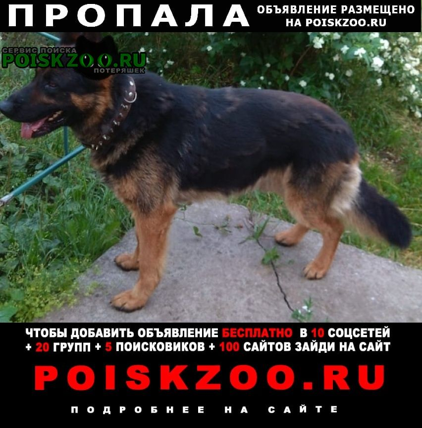 Пропала собака кобель немецкая овчарка чепрачный Люберцы