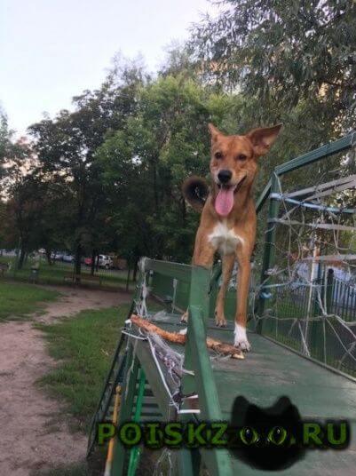 Пропала собака кобель год, кличка джей на платформе луч г.Чехов