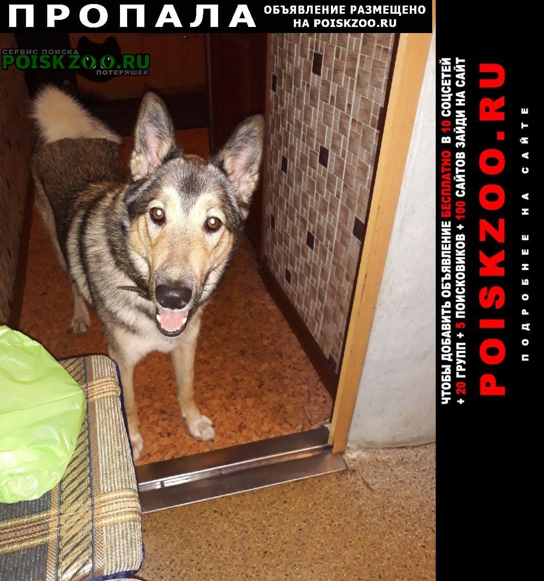 Пропала собака кобель молодой Кировск