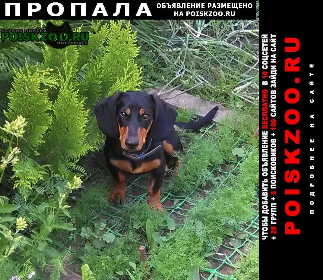 Пропала собака г.Серпухов