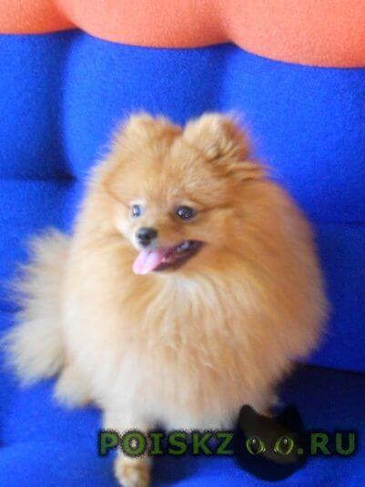 Пропала собака кобель г.Данилов