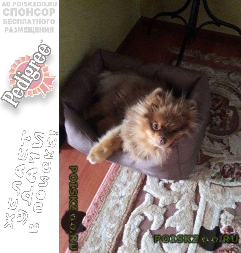Пропала собака кобель кличка мультик. г.Ноябрьск