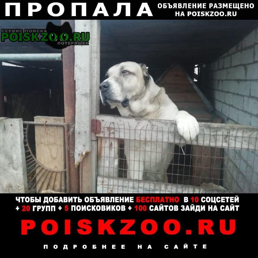 Липецк Пропала собака алабай