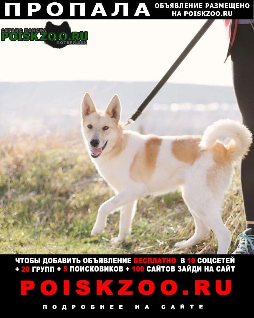 Пропала собака Новороссийск