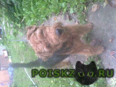 Пропала собака в семхозе.г г.Сергиев Посад