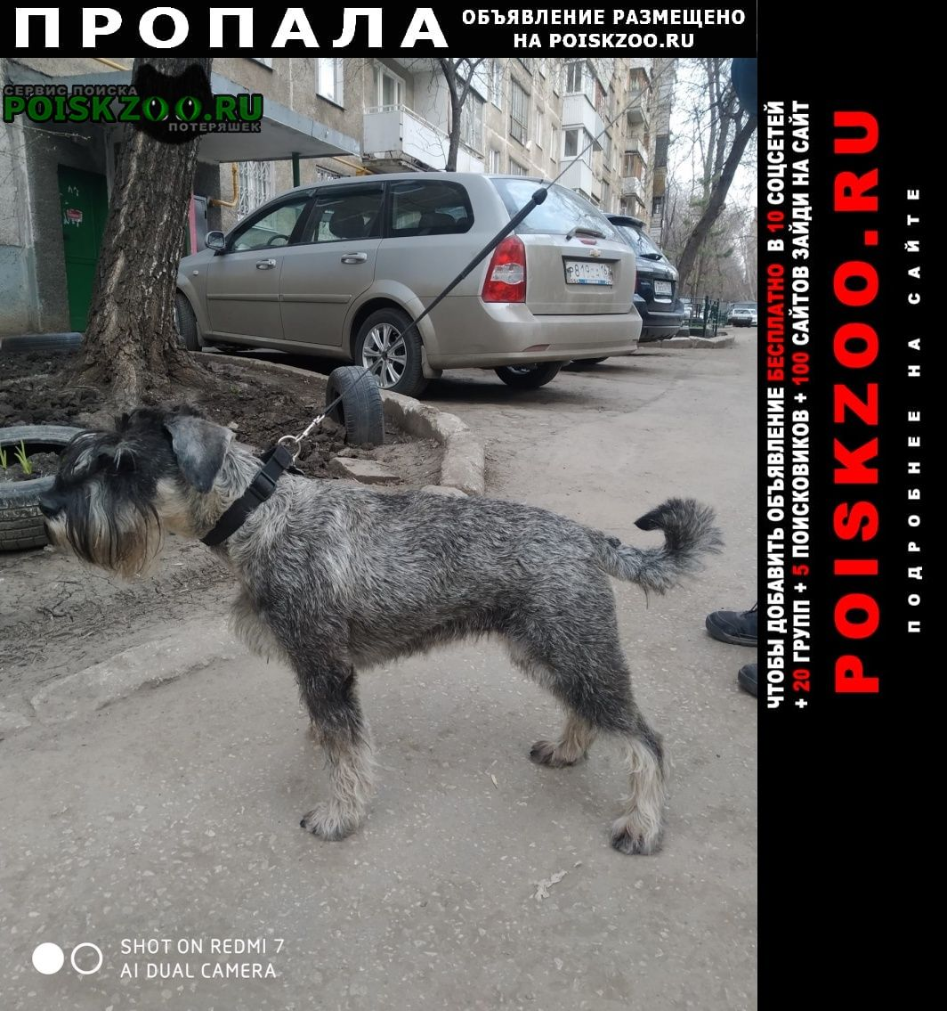 Самара Пропала собака