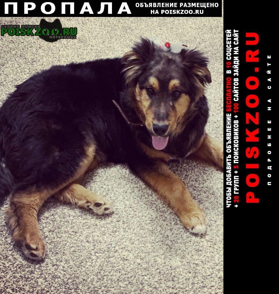 Пропала собака кобель верните за вознаграждение Чебоксары