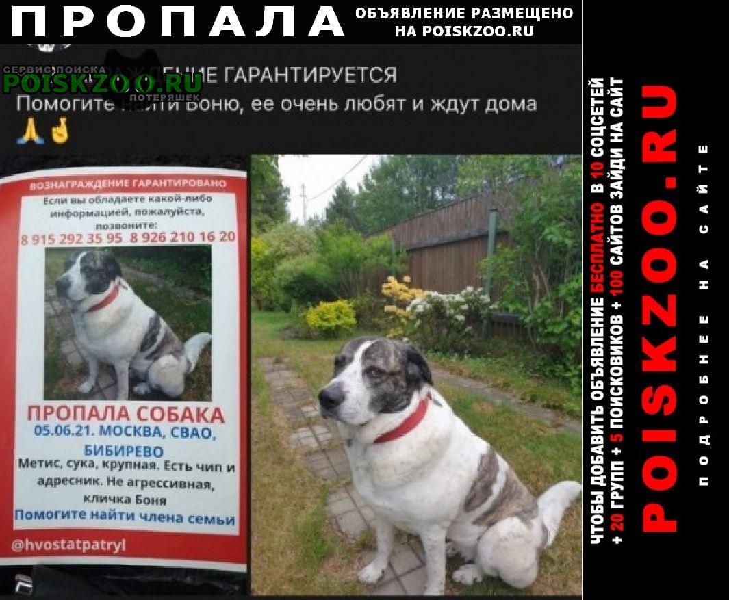 Пропала собака кличка боня Москва