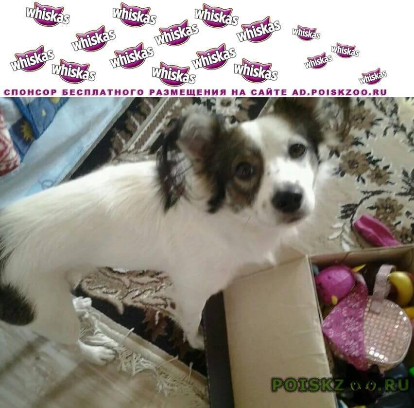 Пропала собака кобель пёс г.Ялта