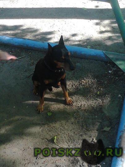 Пропала собака кобель срочно помогите найти г.Хабаровск