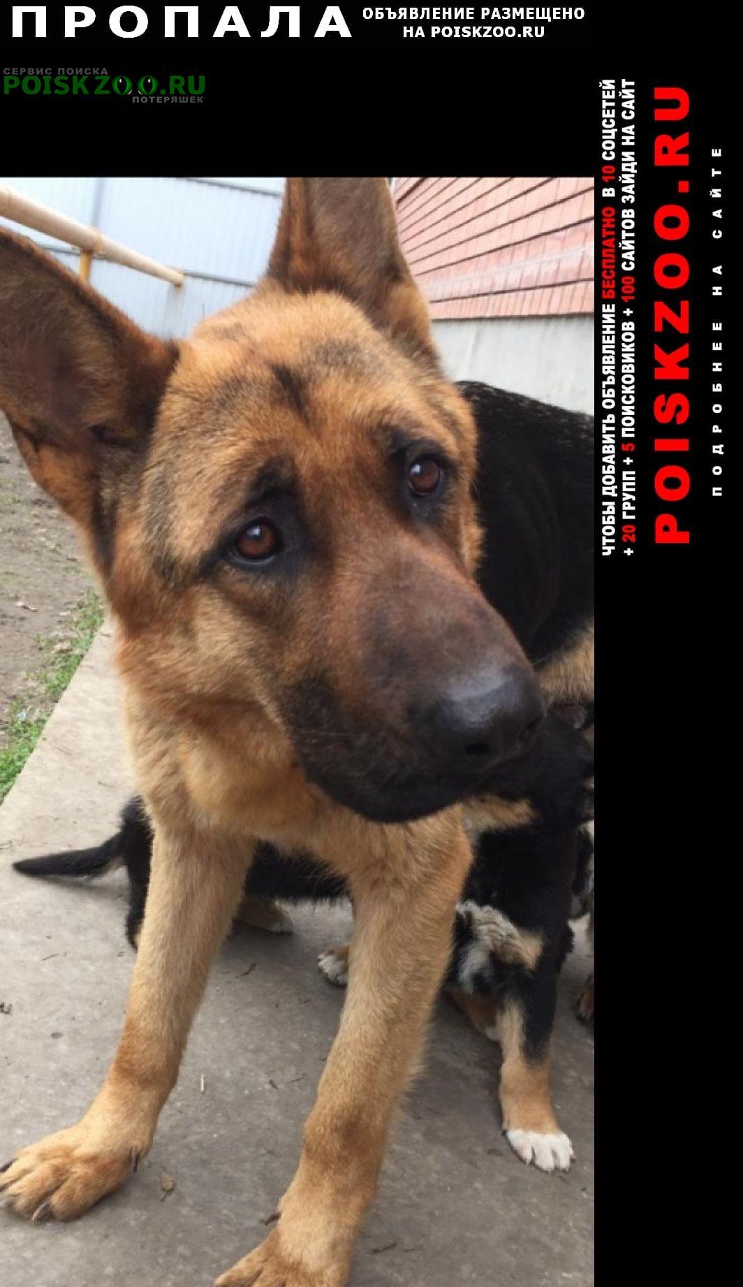 Пропала собака немецкая овчарка Таганрог