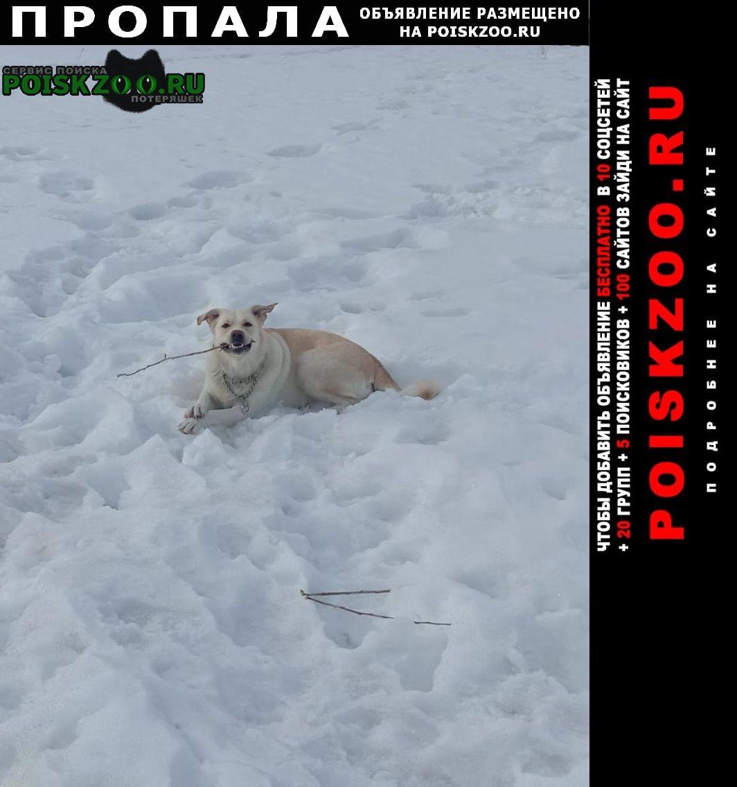 Пропала собака Балахна