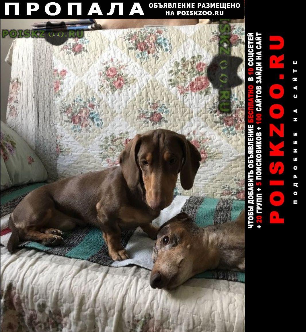 Пропала собака кобель г.Немчиновка