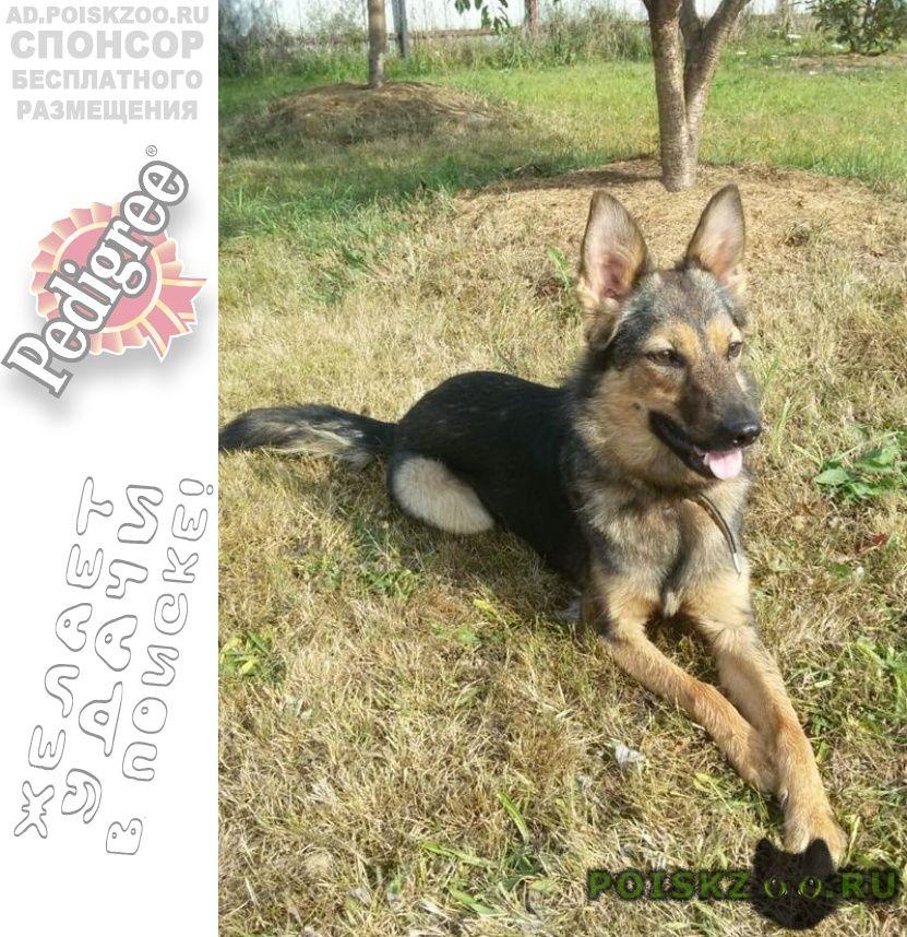 Пропала собака член семьи г.Москва