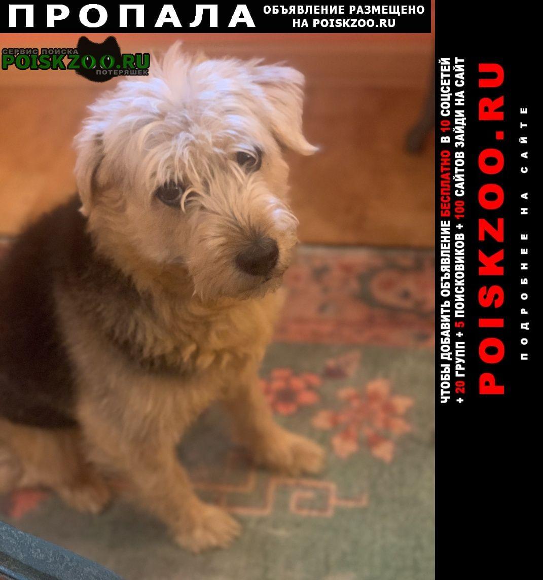 Пропала собака Троицк