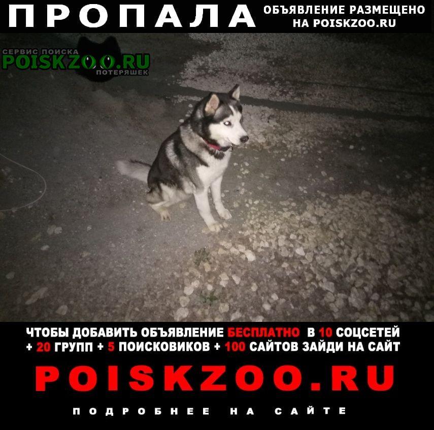 Симферополь Пропала собака