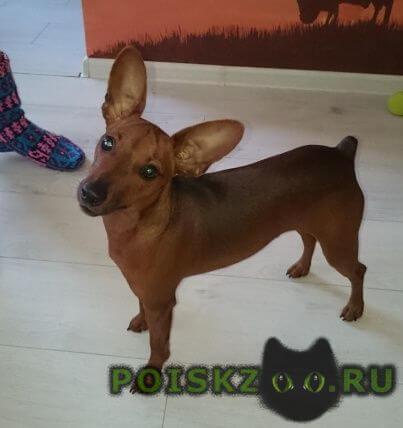 Пропала собака кобель друг г.Москва