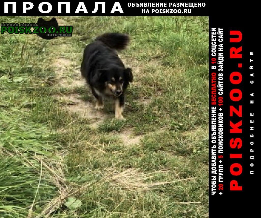 Пропала собака очень срочно  Калининград (Кенигсберг)
