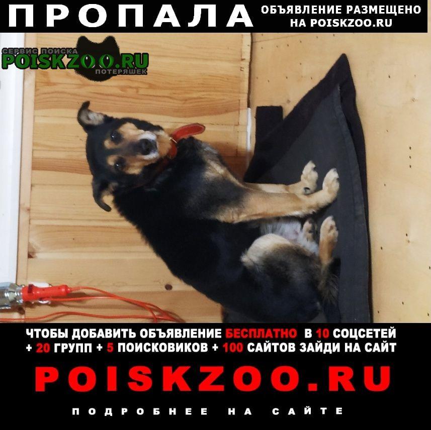 Пропала собака кобель 24 сентября в 13 часов Луга