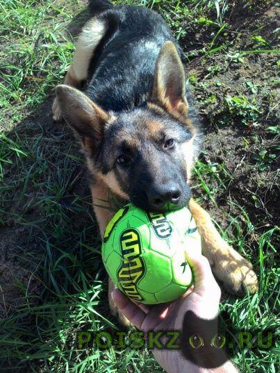 Пропала собака умоляю помогите найти  г.Казань