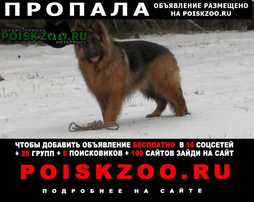 Хотьково Пропала собака кобель длинношерстная овчарка, абрамцево
