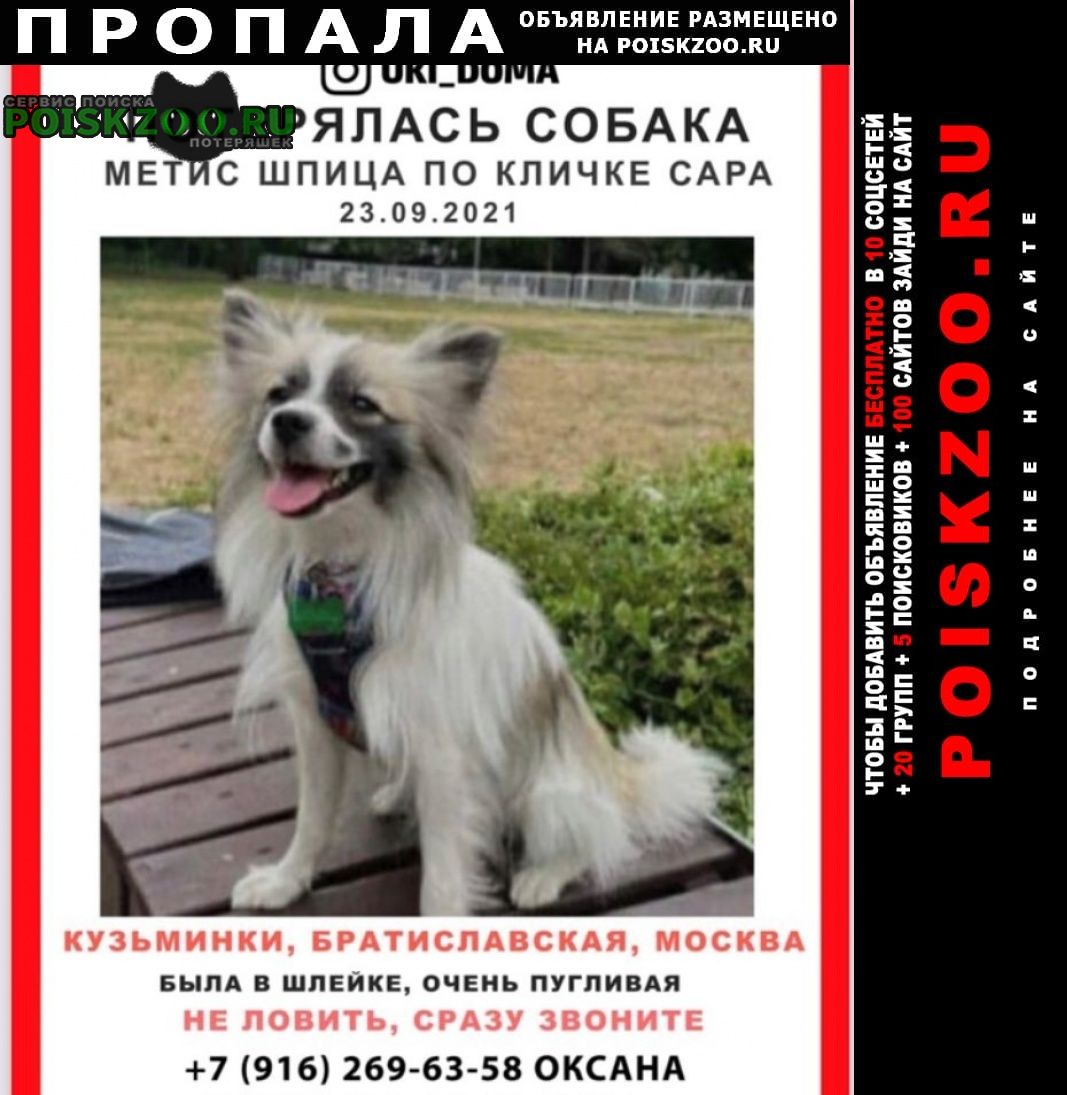 Пропала собака метис шпица Москва