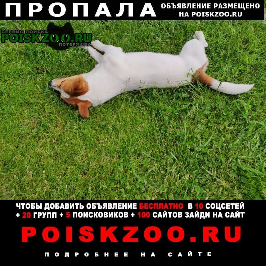 Пропала собака кобель джек рассел терьер Солнечногорск