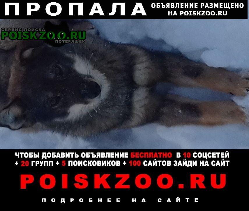 Томск Пропала собака девочка, вознаграждение 5000р