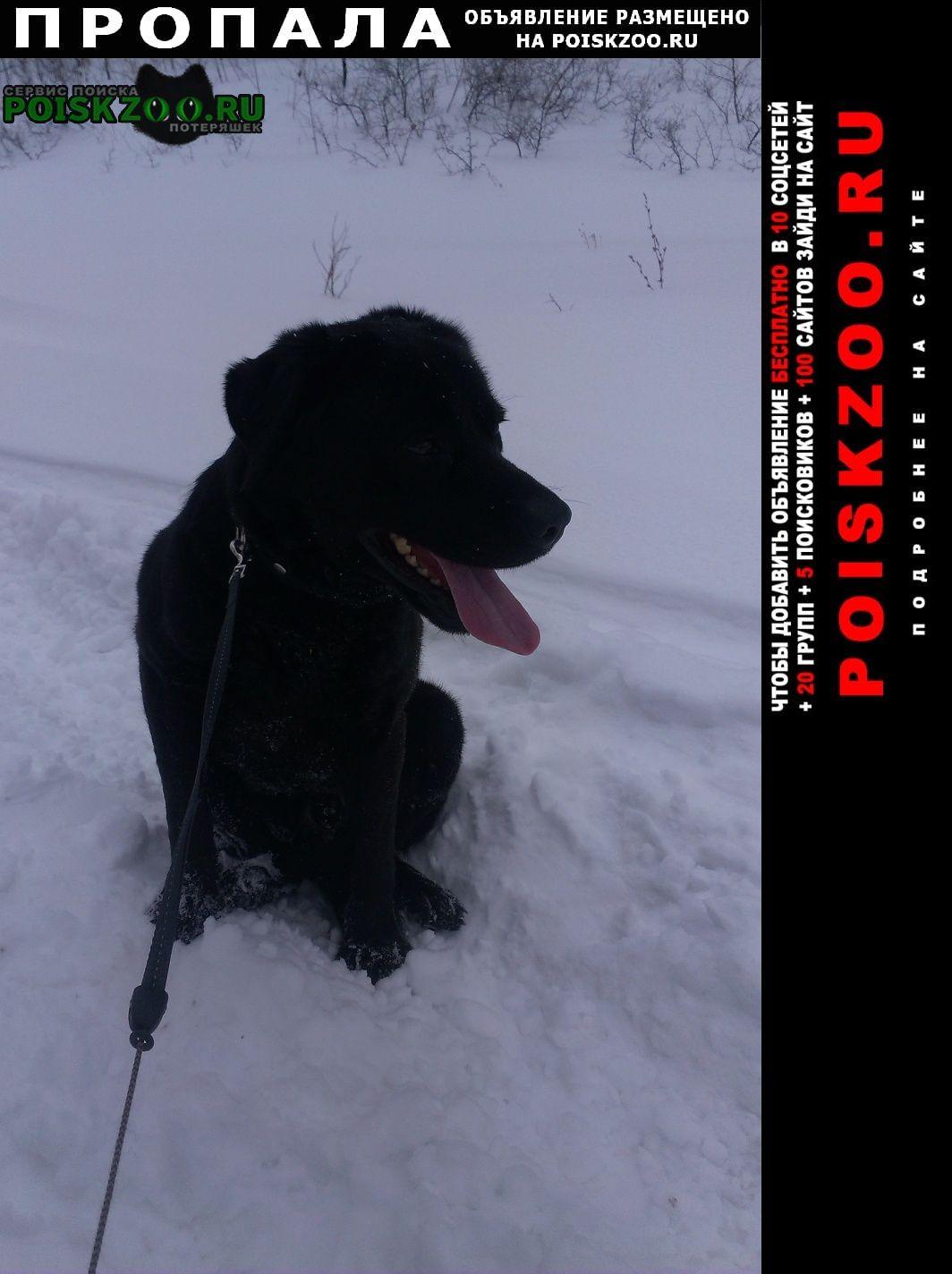 Оренбург Пропала собака лабрадор черный