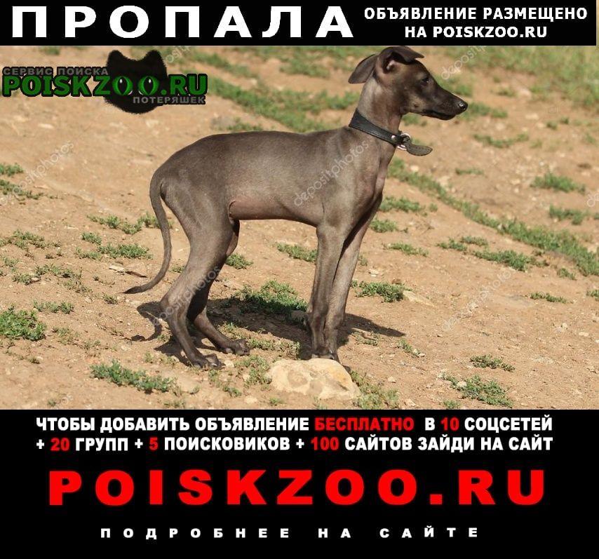 Сестрорецк Пропала собака