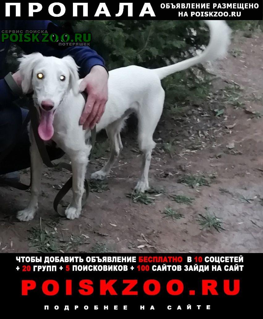 Пропала собака в районе 2 микрорайона те Темиртау