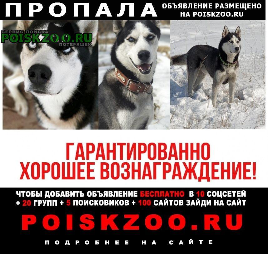 Пропала собака Турунтаево
