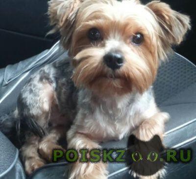 Пропала собака кобель верните за вознаграждение г.Курск