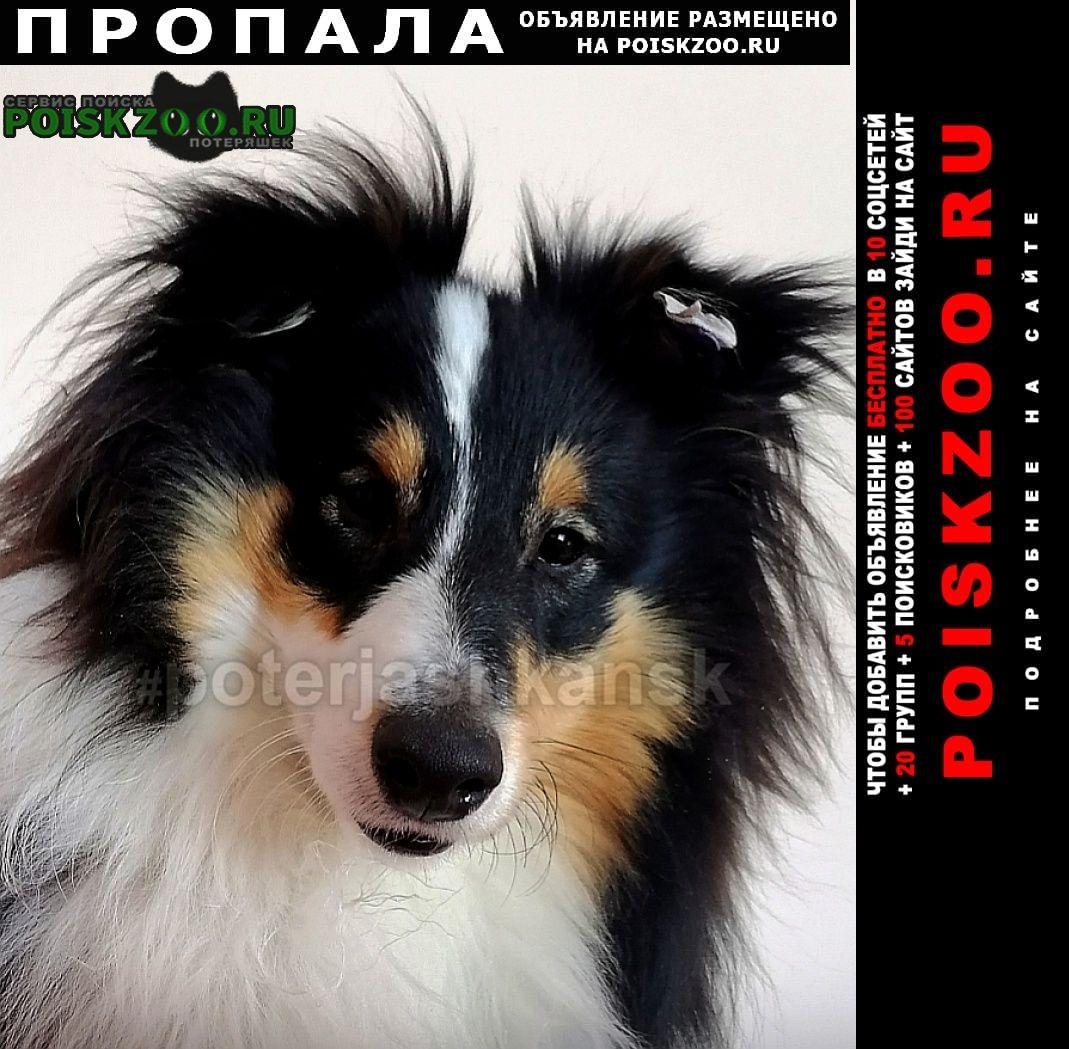Новосибирск Пропала собака