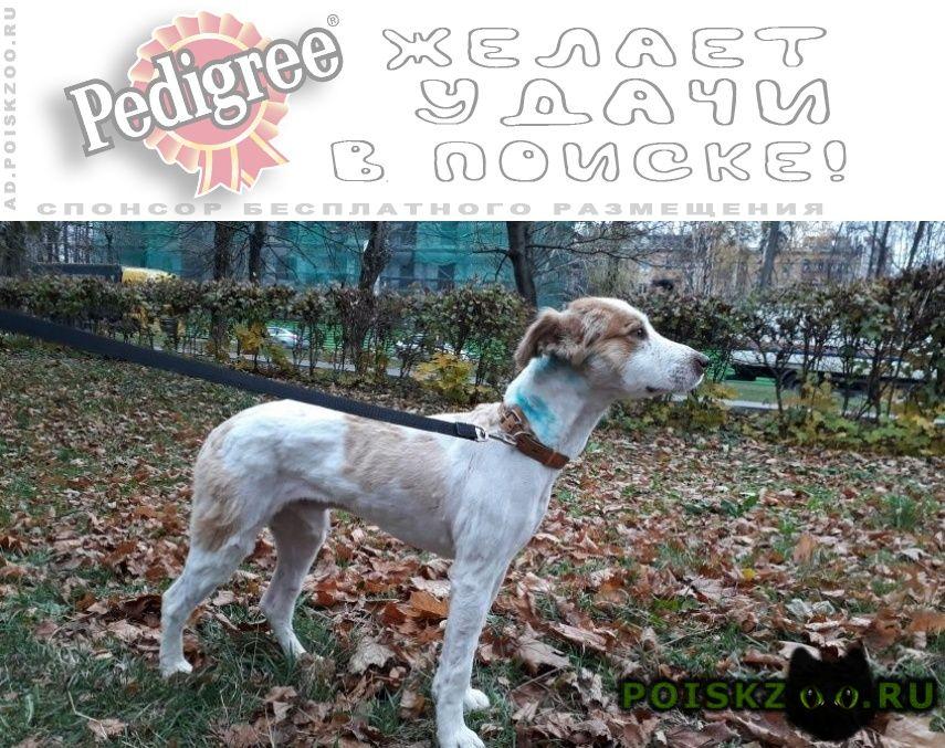 Пропала собака кобель г.Михнево