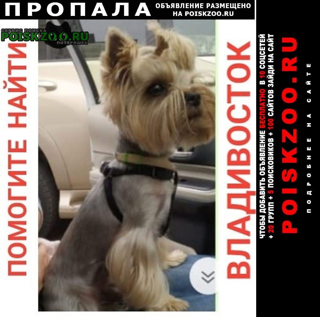 Пропала собака кобель, умоляю помогите найти Владивосток