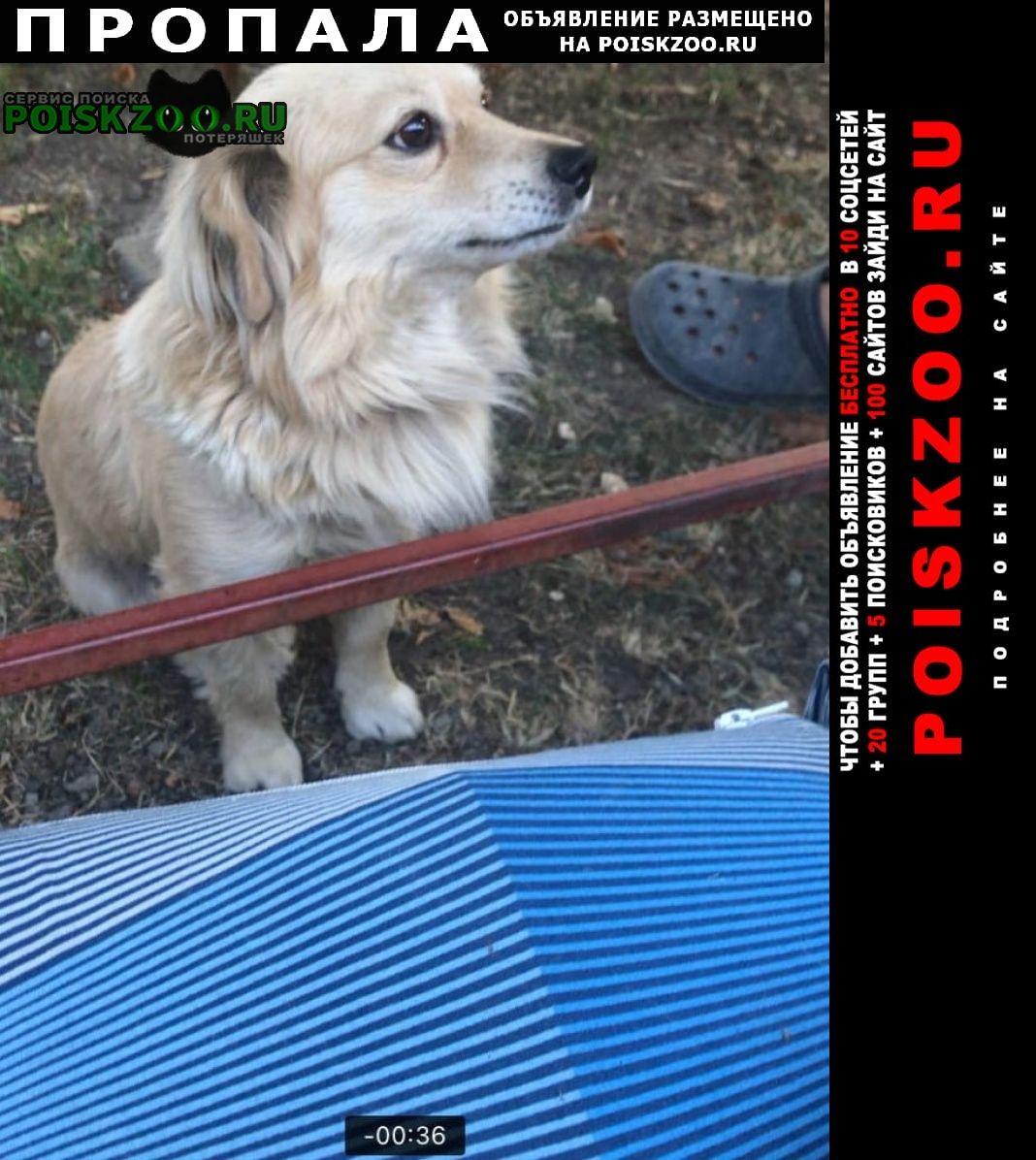 Пропала собака кобель Донецк Донецкая обл.