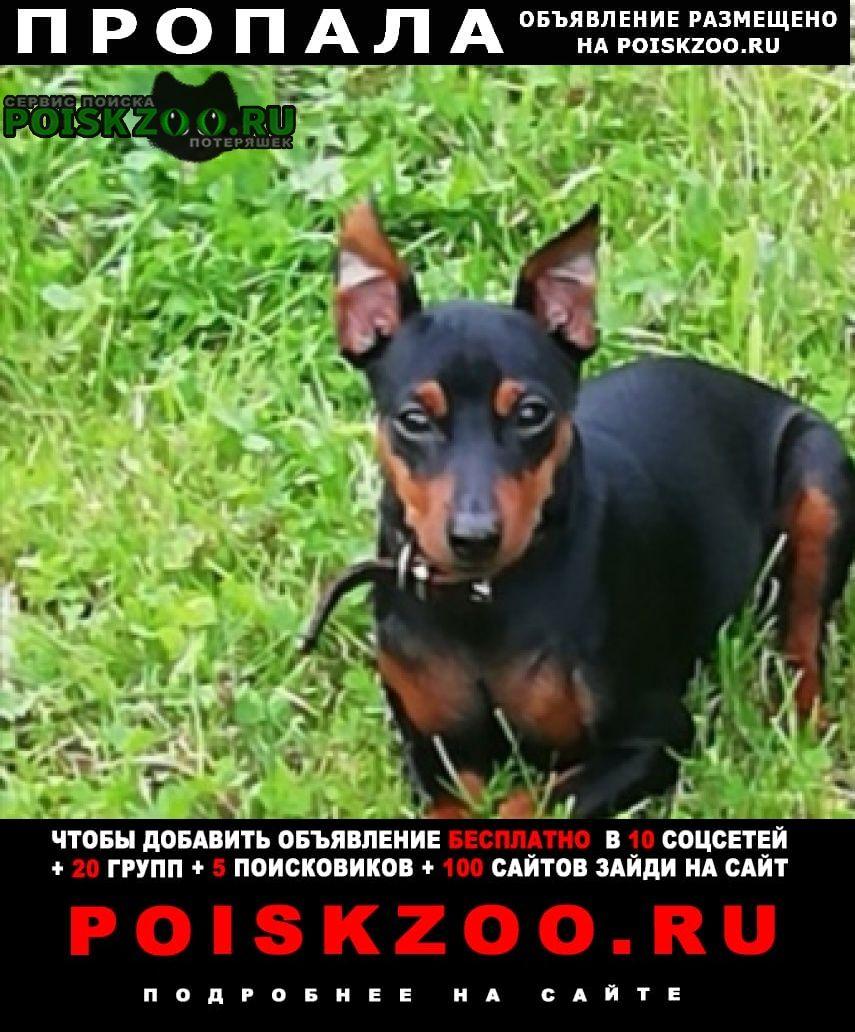 Пропала собака помогите найти.цвергпинчер Санкт-Петербург
