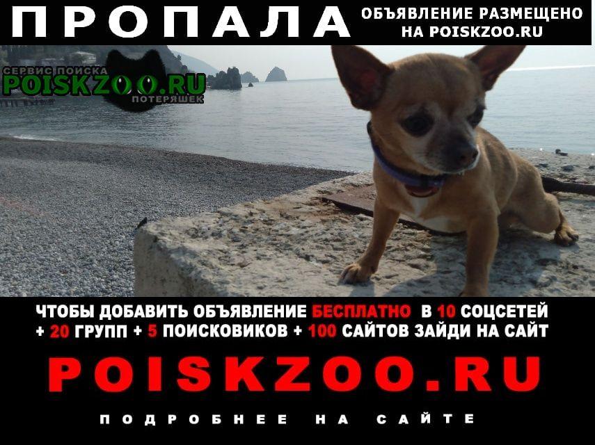 Пропала собака Гурзуф