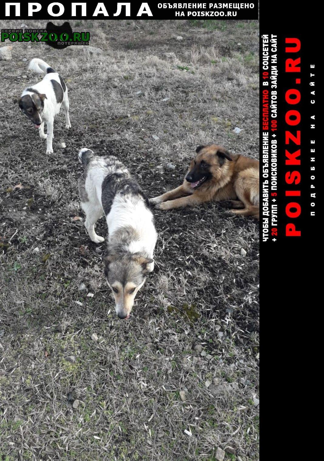Пропала собака в новотитаровской и 2 собаки Краснодар